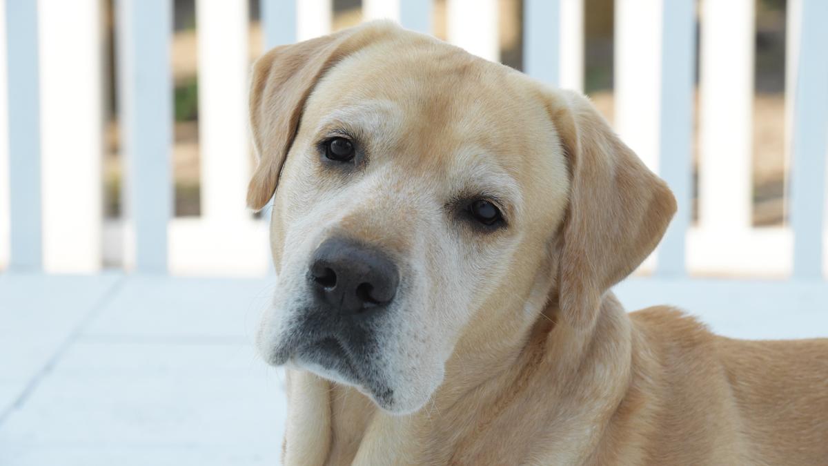 Dog-Ryleigh3